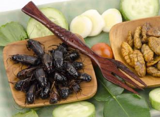 """""""Preferite il buon cibo agli insetti? La cultura vi plagia"""""""