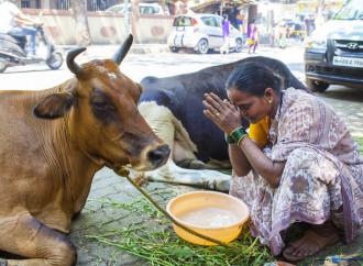 India. Aggrediti sette cristiani accusati di aver ucciso una mucca