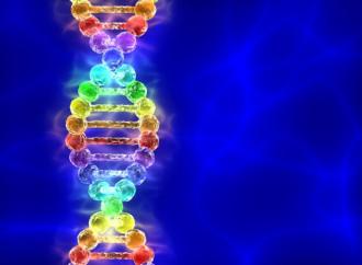 Gay e genetica: la scienza mette le cose a posto