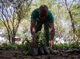 Ghana, 5 milioni di alberi piantati in un giorno