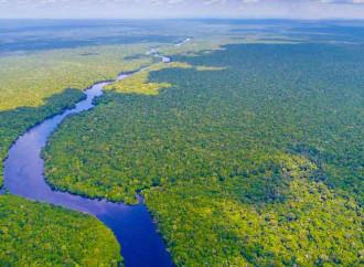 Querida Amazonia, ma senza Dottrina sociale