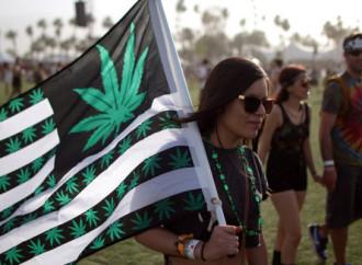 Cannabis, la festa di Sinistra che tira in ballo la Madonna