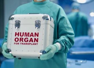 Alfie, il mercato d'organi e la bugia della morte cerebrale